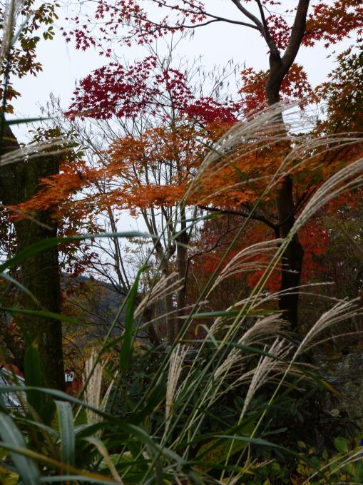 Grasses and trees at Gora Park