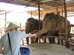 Benno feeding an elephant. They ate bananas, cucumbers, sugarcane, corn cobs and sometimes pumpkin or tamarind balls covered in salt.