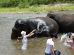 Lara helping to wash the elephants in the river. Watch our for floating turds.