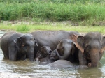 Playing in the water. Some elephants like to roll over and stick their legs in the air.