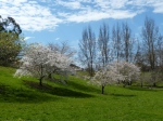 The valley of cherry trees.
