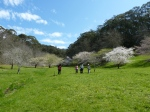 The valley containing cherry blossoms planted over 20 years ago as a joint Japan-Australia act.